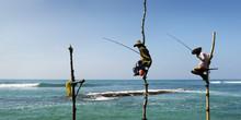 Srilankan Fisherman Fishing Si...