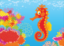 A Funny Red Seahorse Swimming ...