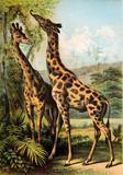 Ilustracja ssaków. - 186183072