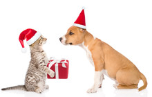Cat And Dog In Red Christmas H...