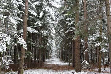 Fototapetazima w lesie