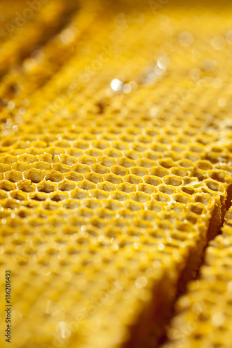 Wellbeing and healthy food series - Close-up shot of fresh organic honey in a comb