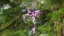 Purple Mini Piñata Hanging On A Spruce.