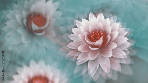 Photo pink lotus flowers with a dreamy blue background, wallpaper, abstract