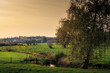 canvas print picture - Meadows with cows, a tree and a small river (Velpe) in the fall. Flemish landscape. Kortenaken, Flanders, Belgium, Europe