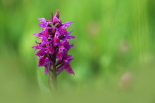 Orchidaceae. The Wild Nature O...