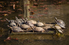 Group Of Turtles Gathering On ...