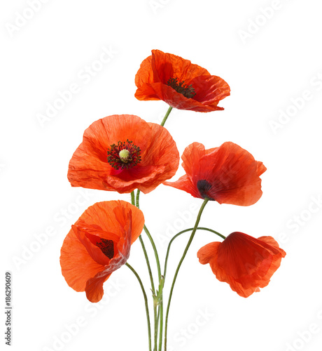 Poster Poppy Five red poppies isolated on white background.