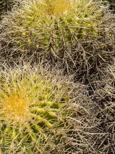 Le Jardin Exotique D Eze Cactus Garden Nice France Buy This