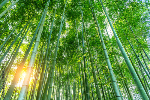 Montage in der Fensternische Bambus bamboo forest. Nature background.