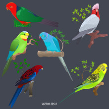 Set Of Brightly Colored Parrots On Branches And In Grass. Gallah (rose-breasted Cockatoo), 
