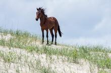 Wild Colonial Spanish Mustangs...