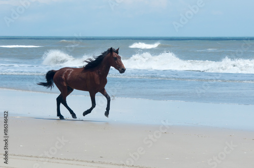 Wild Colonial Spanish Mustangs on the northern Currituck Outer Banks фототапет