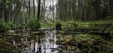 Eine Wilde, Sumpfige Landschaf...