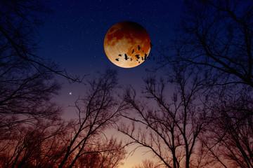 Księżycowe, zaćmienie księżyca