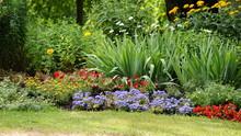 Kunterbunte Pflanzenwelt