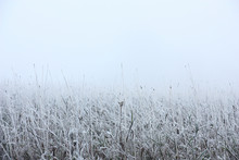 Grasses In Hoarfrost And A Fog...