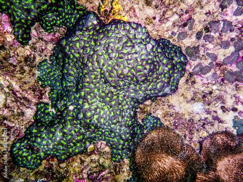 bunte Korallen in den Tropen