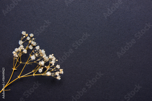 Twig of Small White Dry Spring Flowers on Black Background in ...