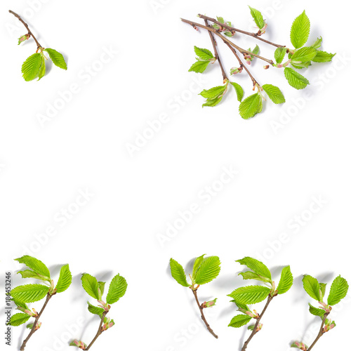 Fototapety, obrazy: spring background of thin tree branches