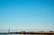 Uccelli migratori volano su fiume in Sicilia
