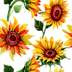 Fototapeta Słoneczniki Wildflower sunflower flower pattern in a watercolor style. Full name of the plant: sunflower. Aquarelle wild flower for background, texture, wrapper pattern, frame or border.