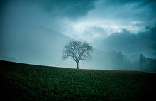 Lonely Creepy Tree On A Field Or Hill In Bavaria For Halloween And Scary In Fog Or Mist