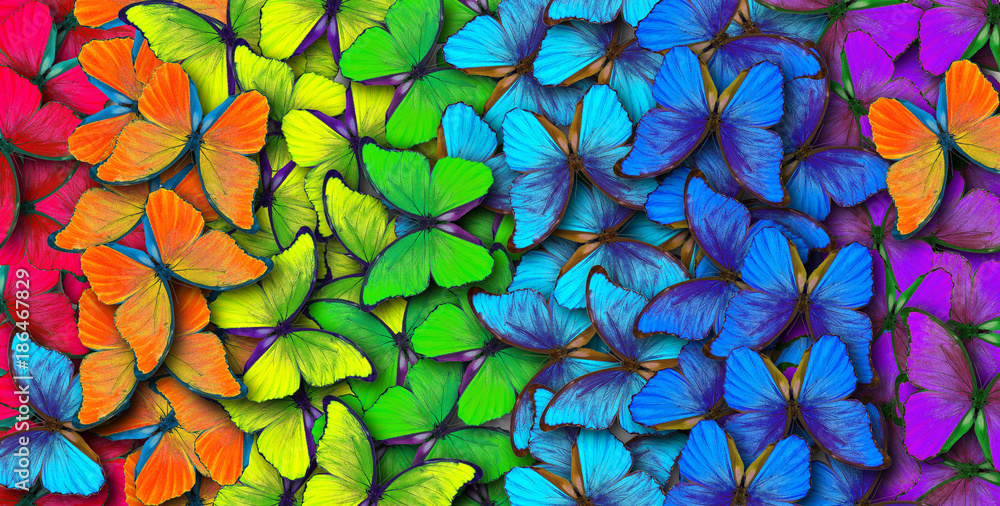 Fototapety, obrazy: Colors of rainbow. Pattern of multicolored butterflies morpho, texture background.