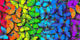 Fototapeta Rainbow - Colors of rainbow. Pattern of multicolored butterflies morpho, texture background.