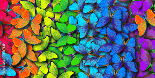Poster Vlinder Colors of rainbow. Pattern of multicolored butterflies morpho, texture background.