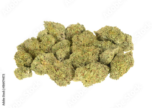Very beautiful large buds Canvas Print