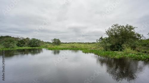 Pond in Brazilian pantanal, a marshy zone with crocodile trails Slika na platnu