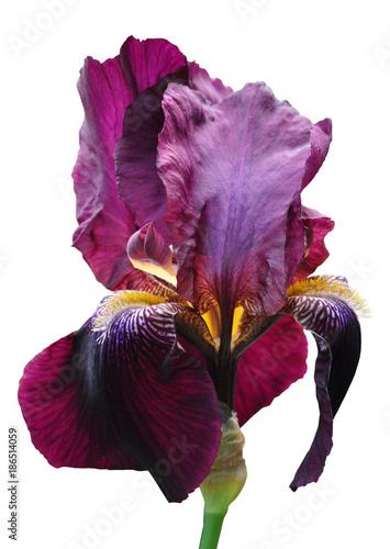 Tuinposter Iris iris flower