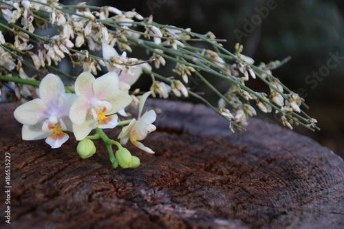 orchidee auf altem baumstamm im garten