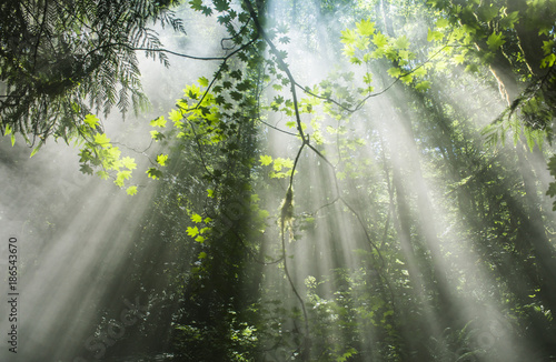 Low angle view of sunlight falling on trees in forest