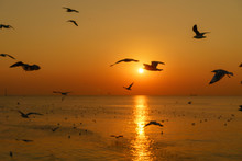 Group Of Silhouette Seagulls F...