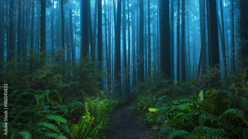 Scenic view of trees and plants growing at Olympic National Park