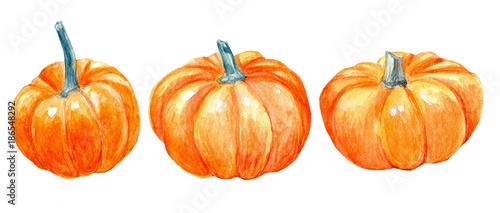 Pumpkin watercolor. Pumpkins clipart harvest fall