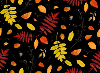 NaklejkaVector Seamless patten background in watercolor style Autumn fall season colorful orange yellow, red fall leaves of forest maple, oak rowan tree. Botanical textile, wallpaper print on black background