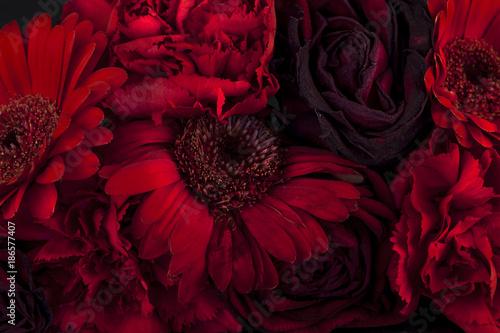 Poster de jardin Dahlia Red flowers on Black background