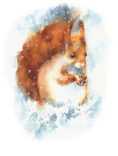 Squirrel Red Squirrel Rodent C...