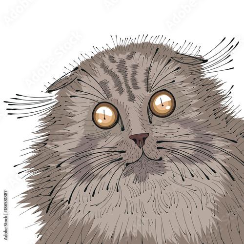 Poster Croquis dessinés à la main des animaux Hand drawn portrait of Cat .