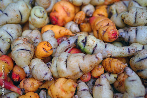 Photo Colorful orange and yellow roots of Mashua (Tropaeolum tuberosum), an Andean veg