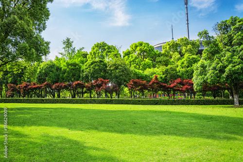 Foto auf AluDibond Lime grun city park