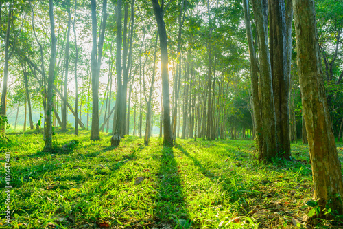 Staande foto Lente forest with sunlight background. Nature and outdoor background