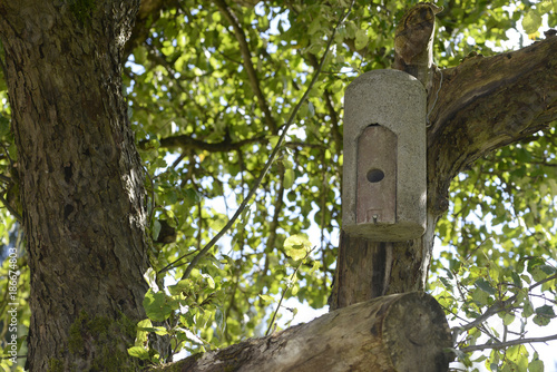 Fledermauskasten, Fledemäuse, Naturschutz, Natur, Baum, Bäume,