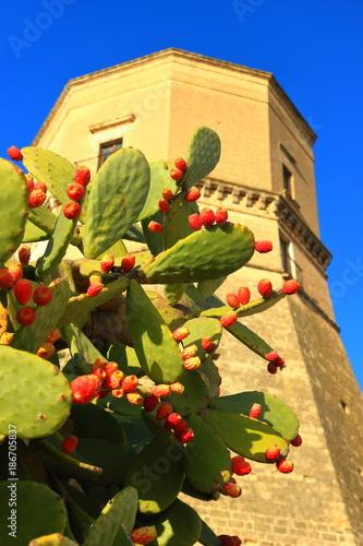 Valokuvatapetti Opuntia fruit, Massafra, Puglia, Italy