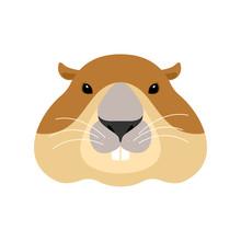 Groundhog Face. Woodchuck Head...
