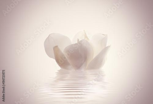 Photo  flor magnolia sobre el agua en calma