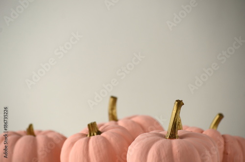Blush Pink Pumpkins With Gold Stems On Solid Color